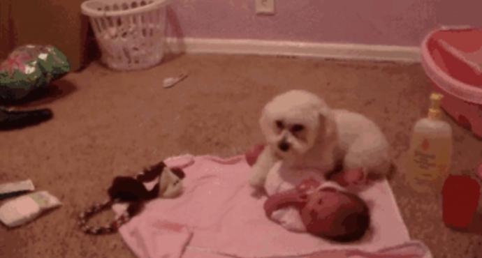 20 Razones por las que 'jamás' deberíamos adoptar a un perro