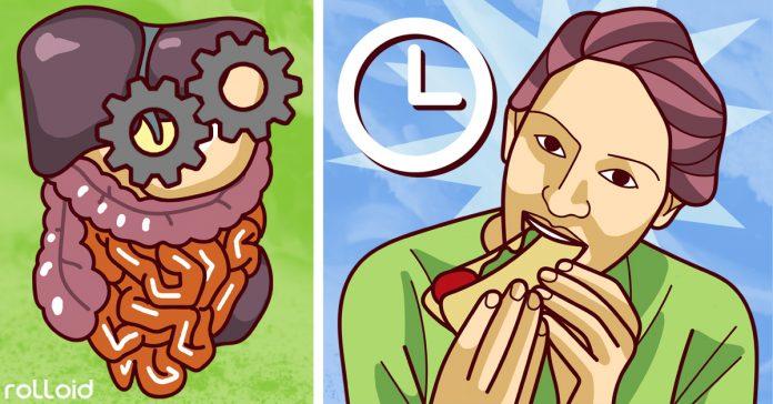 mitos y verdades sobre hacer pequenas comidas diariamente banner