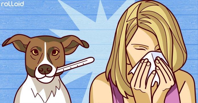 se resfrian los perros como los humanos es contagioso banner