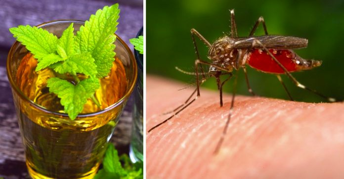 10 insecticidas naturales que te ayudaran a ahuyentar a los mosquitos banner
