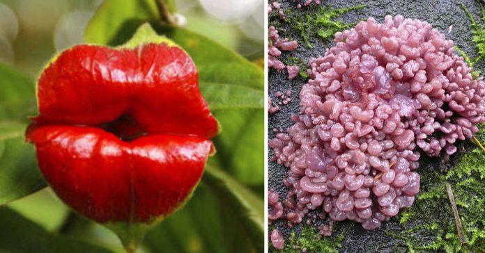 10 plantas y hongos espeluznantes que parecen partes del cuerpo humano banner