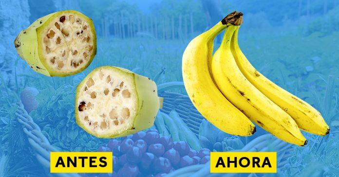 5 imagenes del antes y despues de la forma que tenian frutas y verduras banner