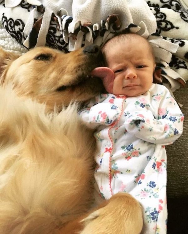 20 Razones por las que 'jamás' deberías adoptar a un perro
