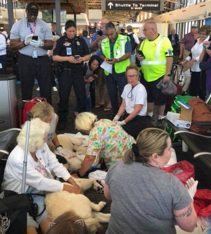 Un perro no consigue coger el vuelo con su dueña tras llegar los servicios de seguridad