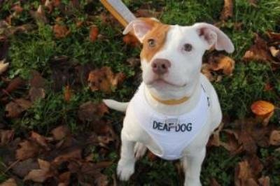 Ivor, el cachorro que fue abandonado 5 veces antes de que se dieran cuenta del motivo por el que no obedecía