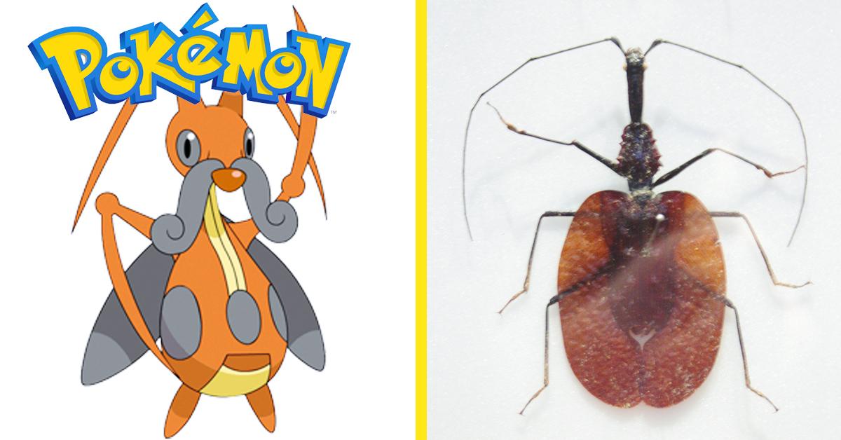 Las 10 Criaturas reales que existen en el mundo y que inspiraron a los Pokemon