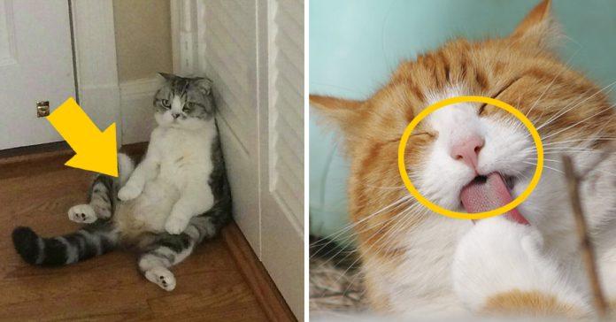 10 curiosidades sobre los gatos que desconocias banner 1