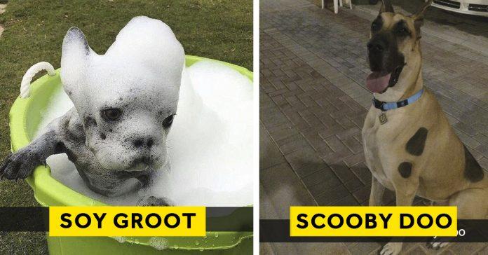 20 imagenes animales perros menos divertidos mundo banner