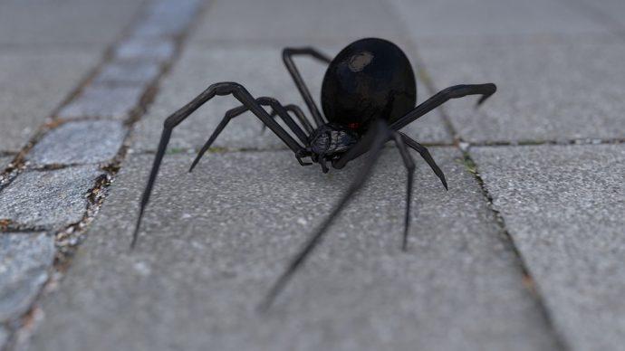 arachnophobia 1703991 960 720