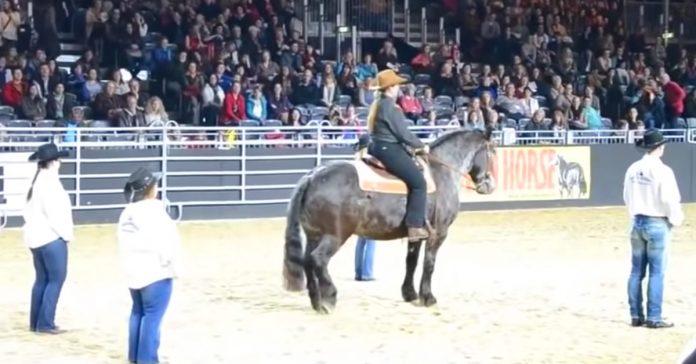 caballo escucha su cancion favorita banner