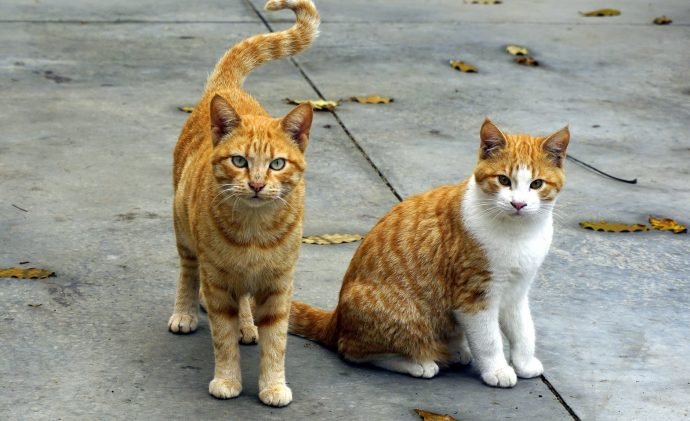 10 Curiosidades sobre los gatos que seguramente nunca te habían contado