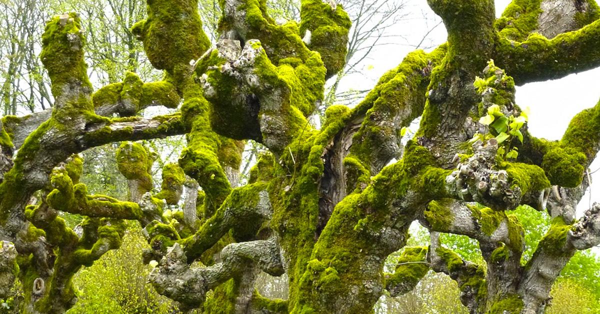 18 Posibles árboles que pueden afectarte según la fecha en la que naciste