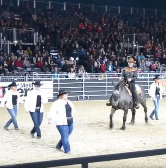 Un caballo se viraliza al escuchar en directo su canción favorita