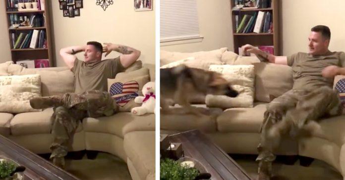 graban en video el momento en el que pastor aleman soldado banner