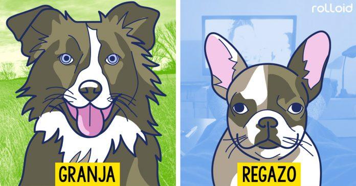 guia trucos para encontrar al perro perfecto banner