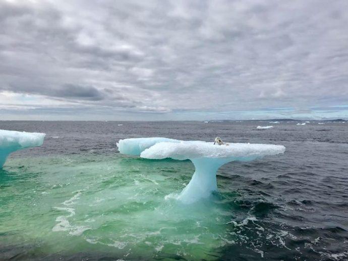 """""""La foca"""": Unos pescadores la confunden creando el fenómeno viral del momento"""