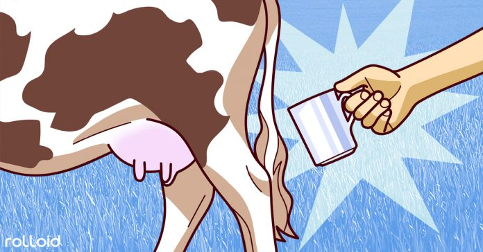 se vuelve a poner de moda la locura beber leche cruda banner