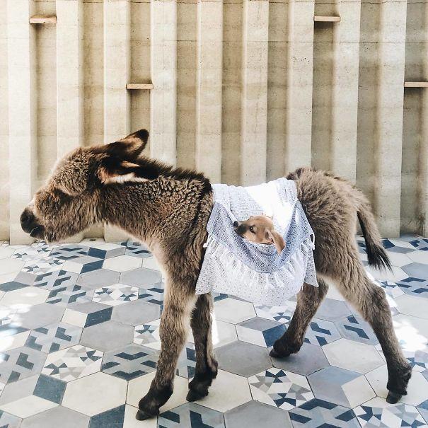 20 Crías de burro poco comunes que han conseguido poner patas arriba Internet