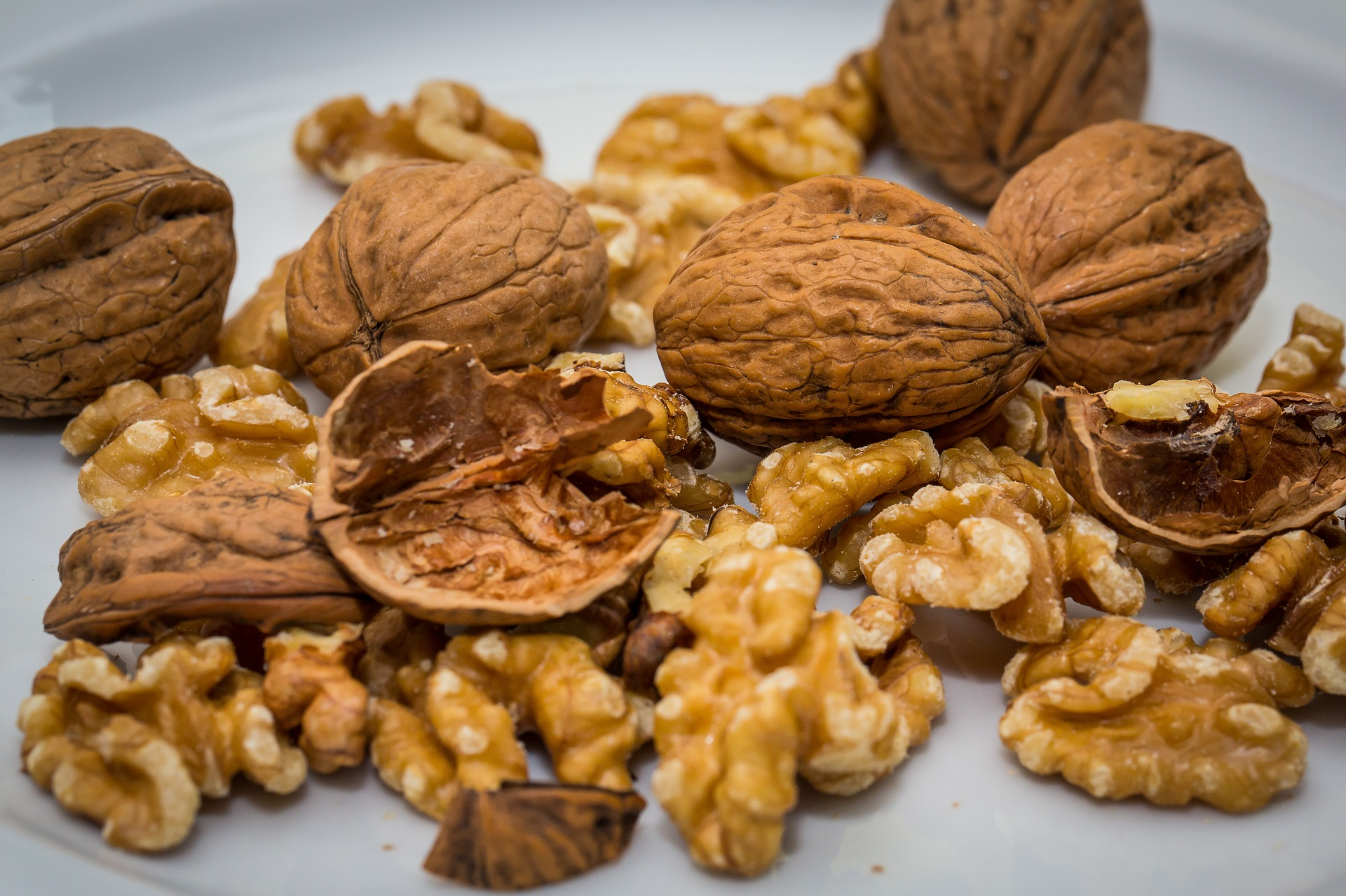 walnut 2816935 1920