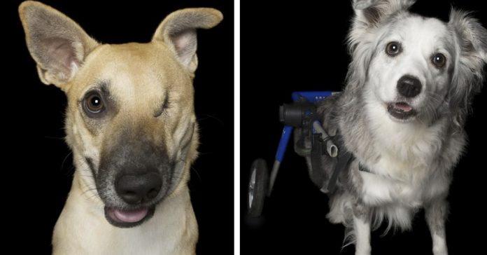 12 imagenes de perros perfectamente imperfectos banner