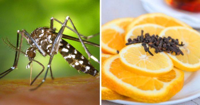 5 formas de evitar las picaduras de mosquito
