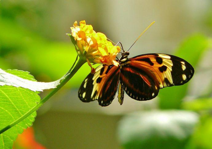 butterfly 336913 1280