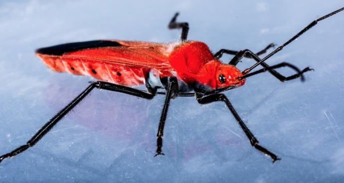 5 Criaturas raras que son capaces de sobrevivir a cualquier cosa
