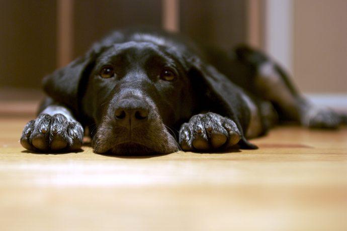 el estudio que demuestra como los perros se comunican con nosotros 1533810691