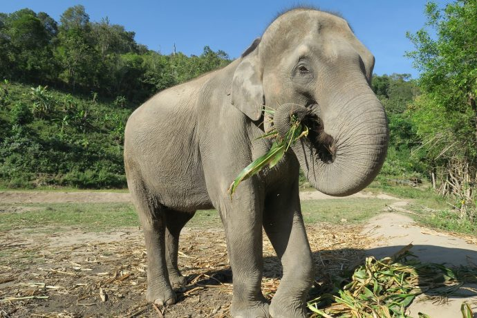 elephant 1500095 1280