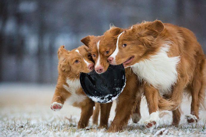 20 Imágenes virales consideradas como las mejores fotos de Perros del año
