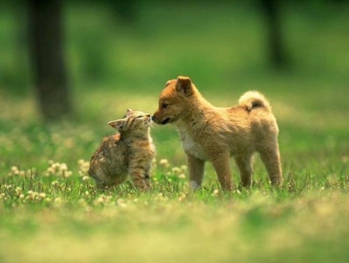 """""""¿Quiénes son más listos, los perros o los gatos?"""": La pregunta que se ha viralizado"""