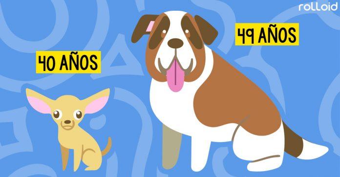 la verdadera edad de los perros comparada con los humanos