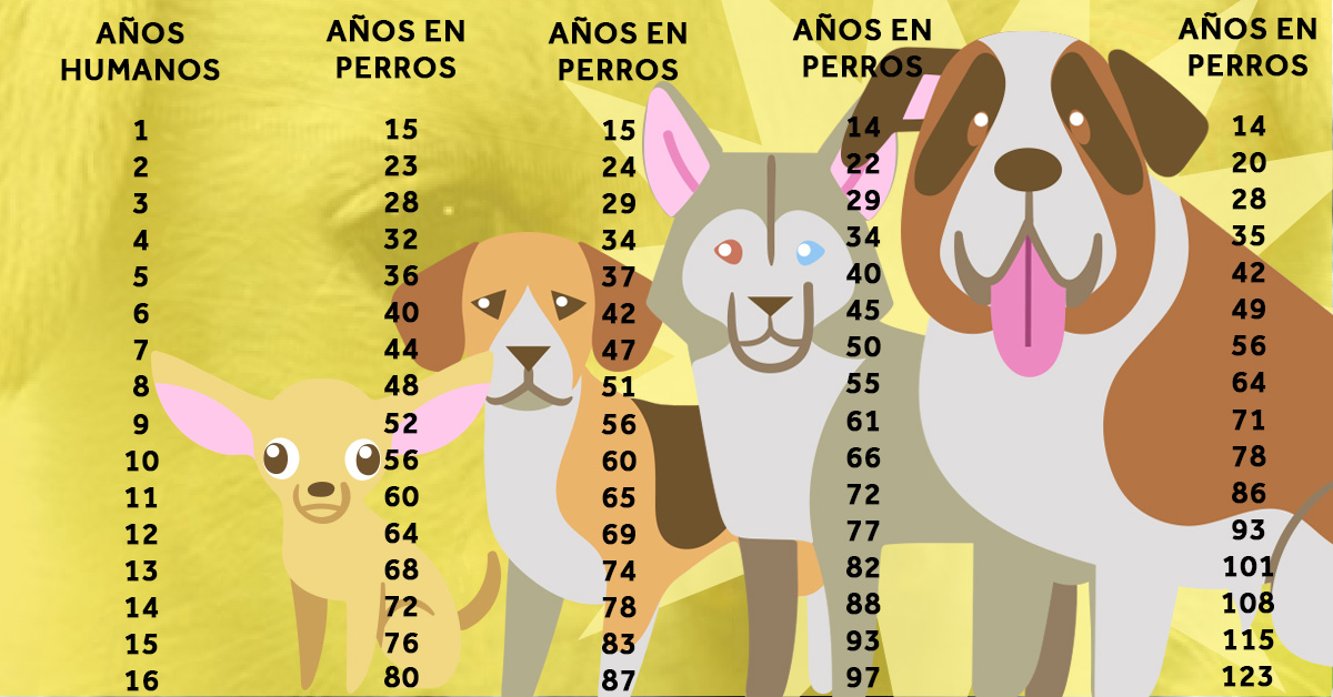 la verdadera edad de los perros en comparacion con sus propietarios 01