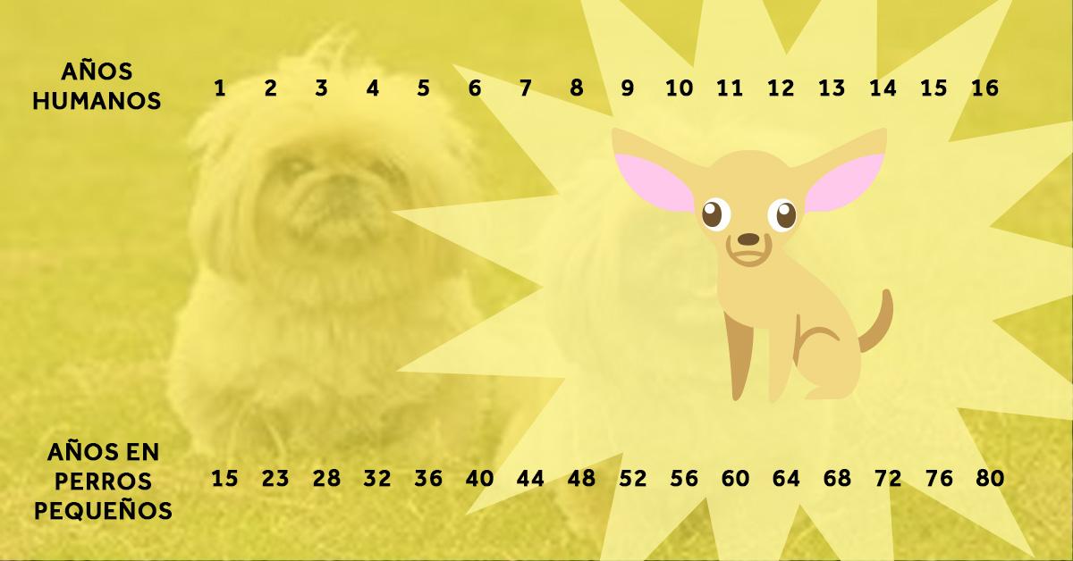 la verdadera edad de los perros en comparacion con sus propietarios 02