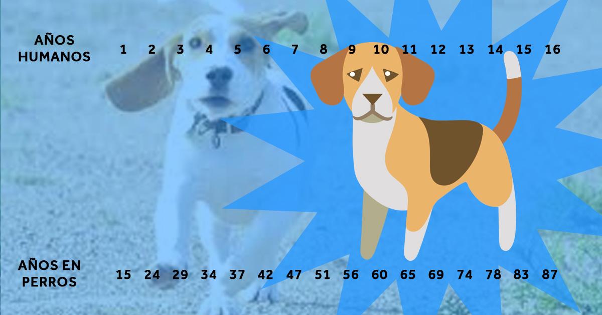 la verdadera edad de los perros en comparacion con sus propietarios 03