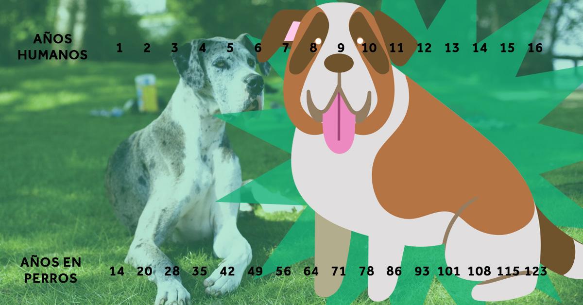 la verdadera edad de los perros en comparacion con sus propietarios 05