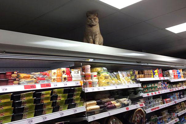 20 Cosas surrealistas que la gente se ha encontrado en un supermercado