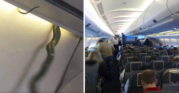 los 10 anecdotas mas disparatadas a bordo de un avio