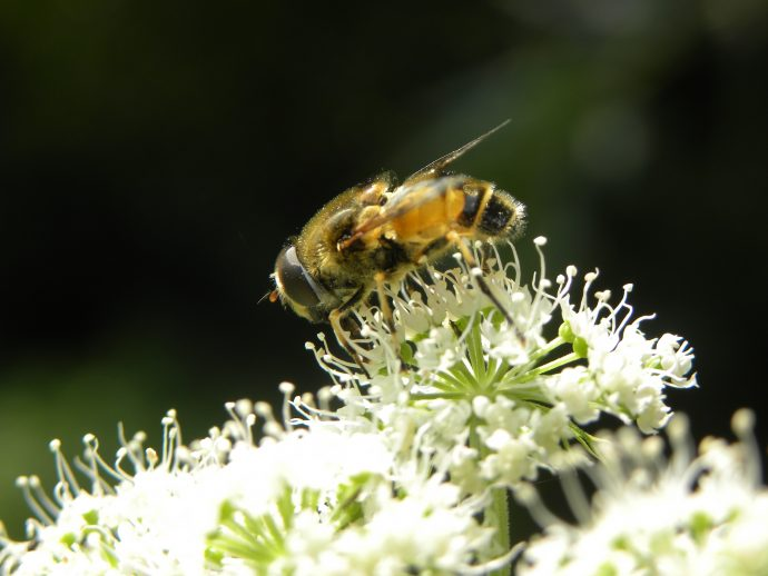 nature plant photography flower fly honey 595955 pxhere.com