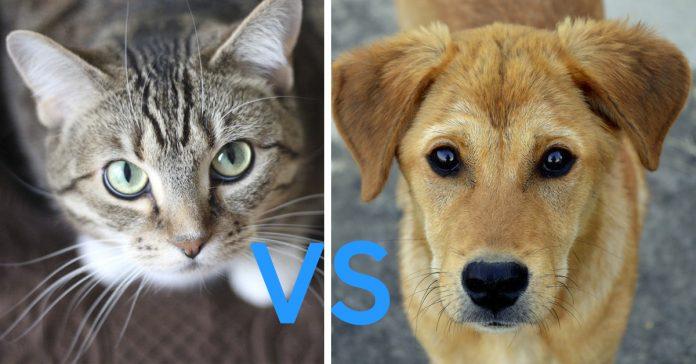 quienes son mas listos los perros o los gatos banner