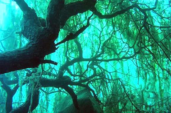 bosque sumergido lago kaindy