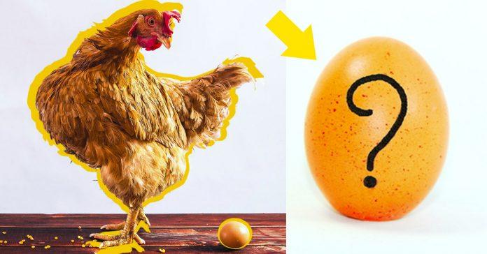 que fue antes huevo o gallina banner