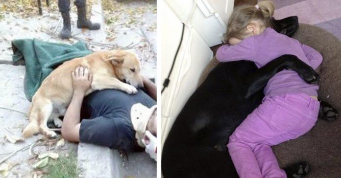 20 razones por las que jamas deberiamos adoptar perro banner
