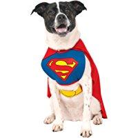 8 de los más Divertidos disfraces que existen para perros con los que triunfar en Halloween