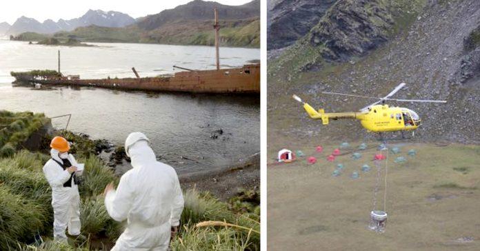 una isla del atlantico consigue erradicar banner