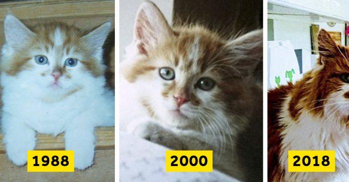 12 imagenes gato viejo mundo banner