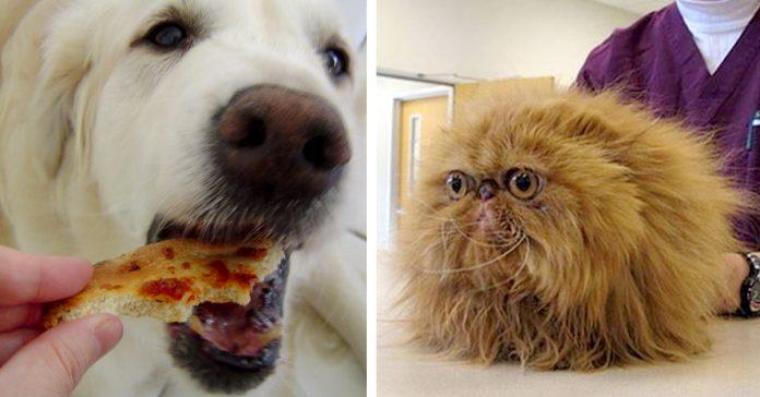 5 confesiones casos reales con los que se ha encontrado veterinario banner