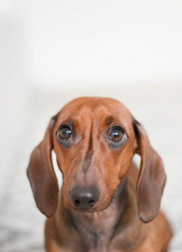 Un veterinario explica lo que hacen los perros momentos antes de decir su último adiós