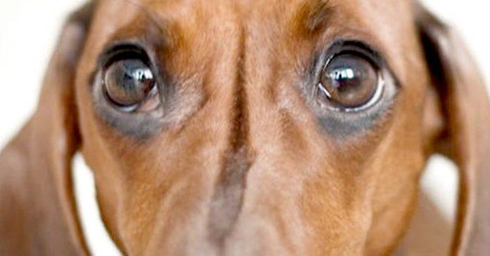 lo ultimo que hacen perros antes morir banner