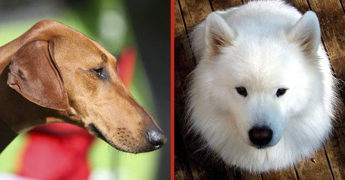 las 8 razas de perros mas caras del mundo banner